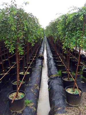 The Nursery In Haining China Began With More Than 500 000 Oregon Trees That Were Potted And Grown Containers For Local Market